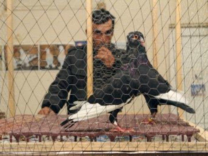 Muğla'da Güvercin Mezatı Açıldı