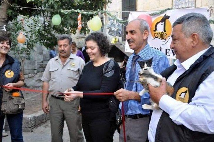 Gaziantep'te Kedi Evi De Hizmete Açıldı