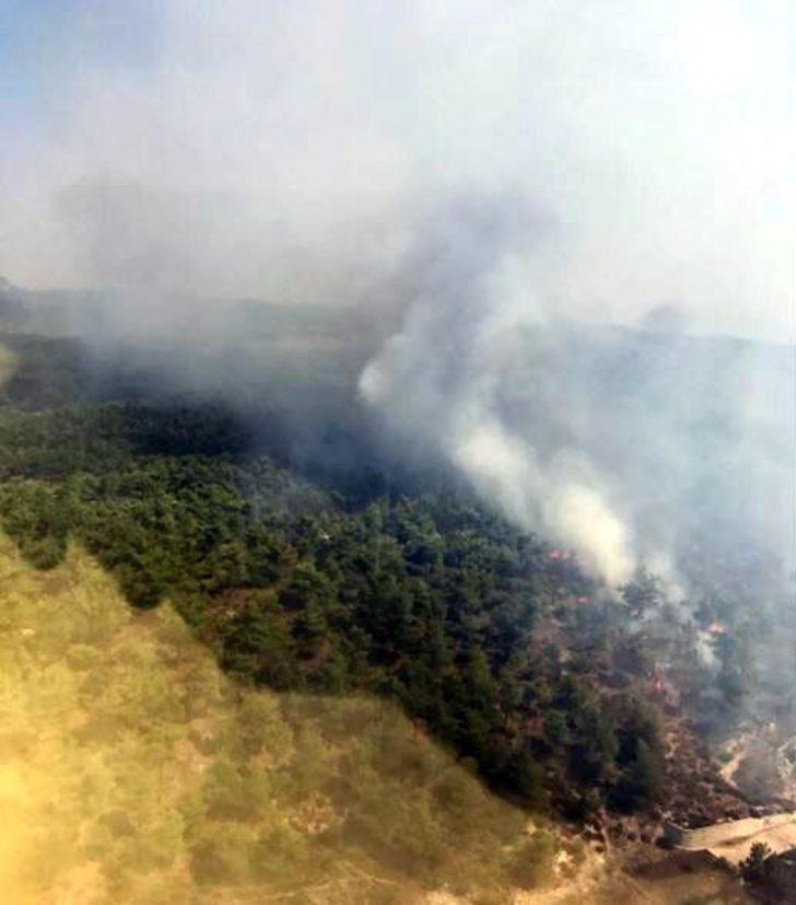 Manisa'da orman yangını (1)