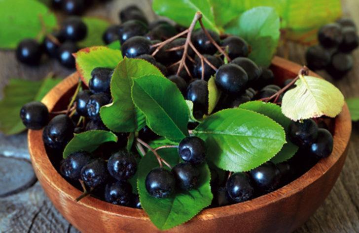Mucize bitki aronia kanser düşmanı