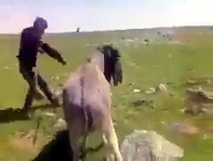 Eşeğe sopayla işkence yapan çoban jandarma tarafından yakalandı