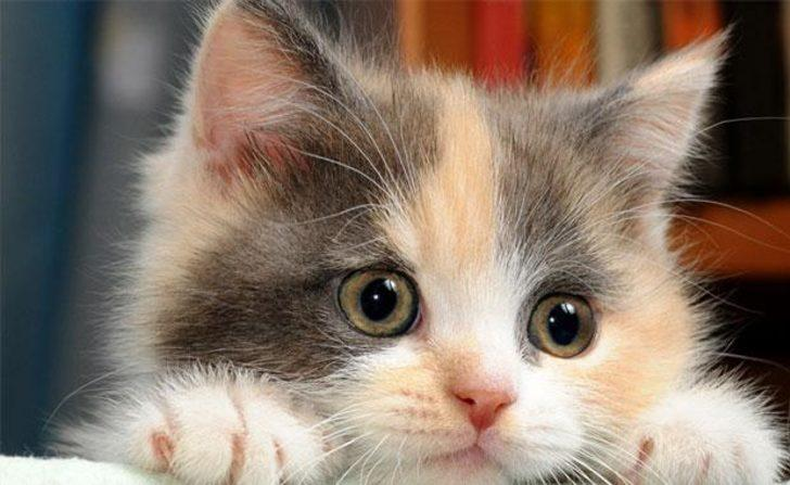 Kedi isimleri dişi ve erkek:  Klasik ve modern kedi isimleri