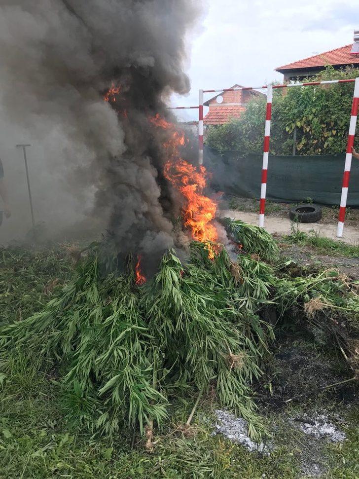 750 kök kenevir yakılarak imha edildi
