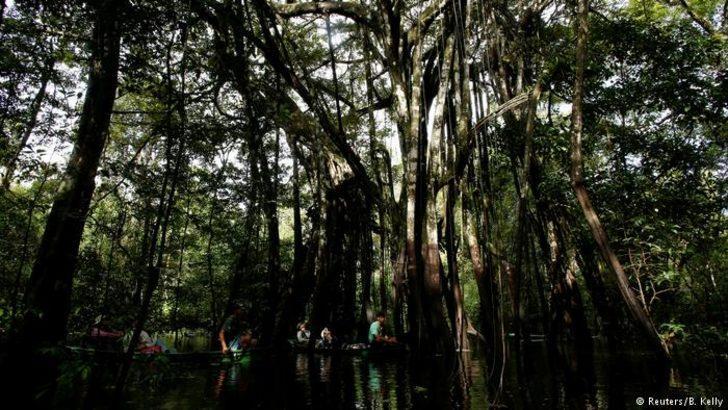 22 yıldır Amazonlarda tek başına