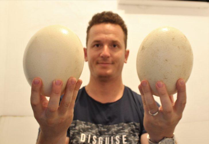 Deve kuşu yavruları 500 liradan satılıyor! Siparişlere yetişemiyor