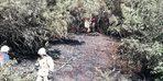 Odunlukta başlayan yangın ormana sıçradı
