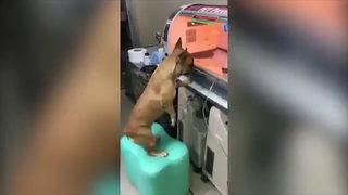 Köpeğin bu görüntüsü duygulandırdı