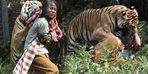 Bengal kaplanı üzerine atladı ve... İnanılır gibi değil