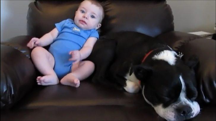 Pöff koktu! Evin köpeğinin altına yapan bebeğe verdiği tepki