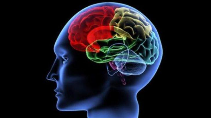 Laboratuvarda minyatür insan beyni üretildi