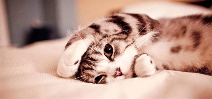 Bilim Kedi Videolarının Zihninizi Açtığını ve Performansınızı Arttırdığını Söylüyor