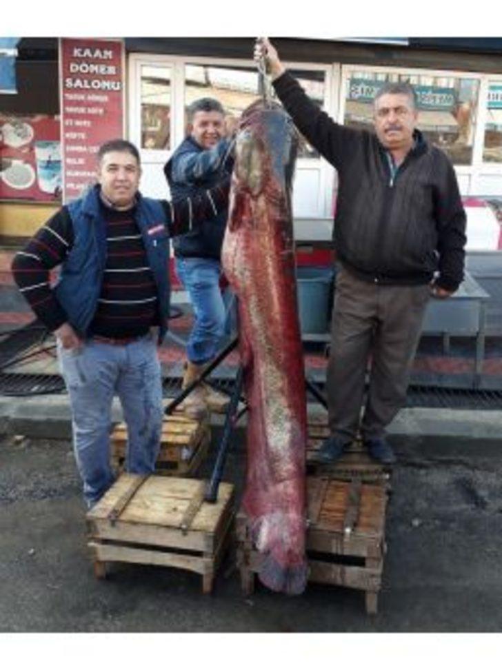 Hirfanlı Barajı'nda 60 Kiloluk Yayın Balığı Yakalandı