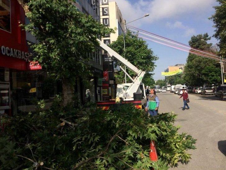 Belediye Ekipleri Ağaçların Bakımını Yapıyor