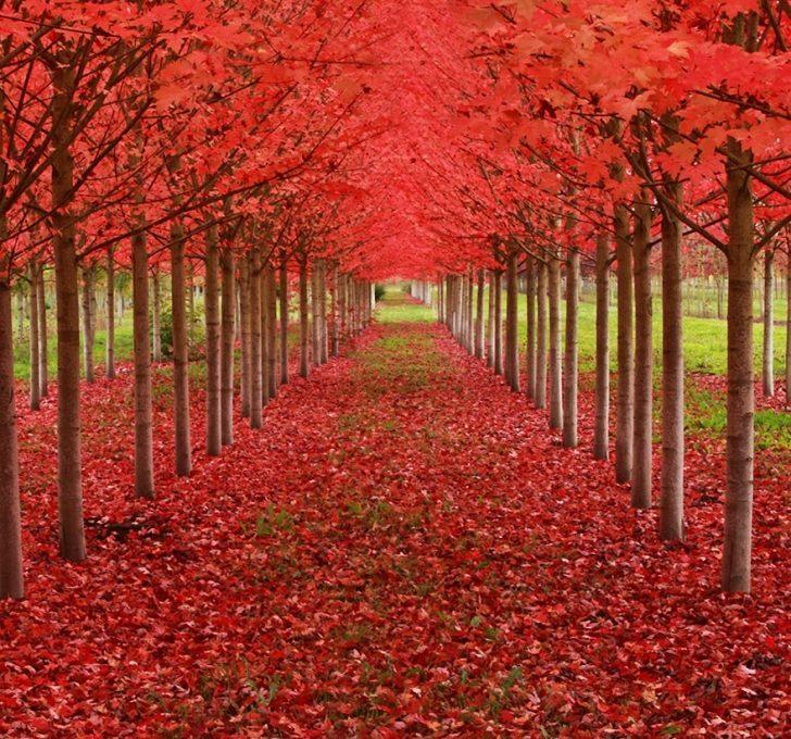 Asla Kesilmeleri Planlanmayan Dünyanın En Güzel 13 Ağacı