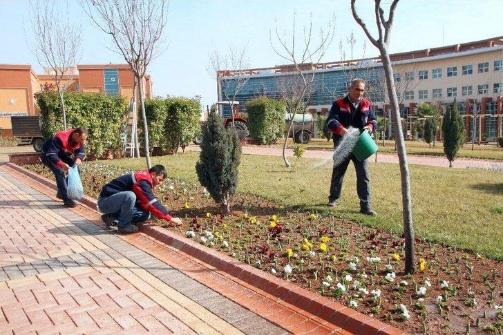 Üniversite Kampüsünde Bahar Hazırlığı