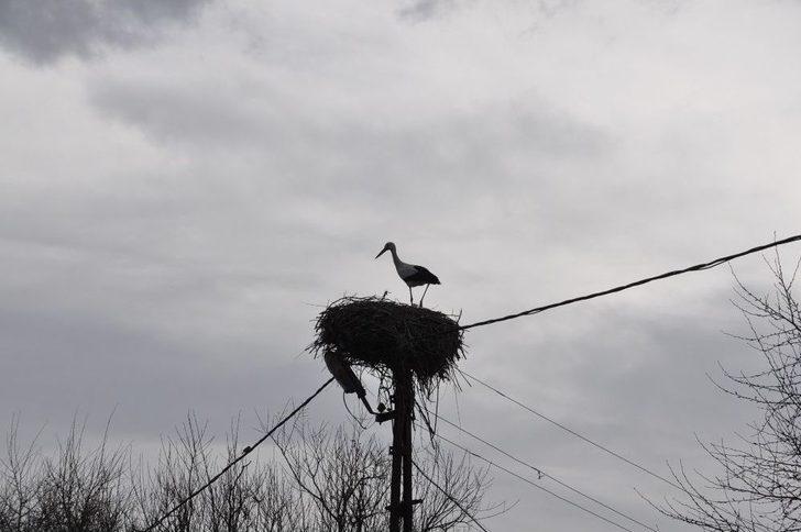 Dikme Köyü'nde Leylek Yuvasını Yaptı