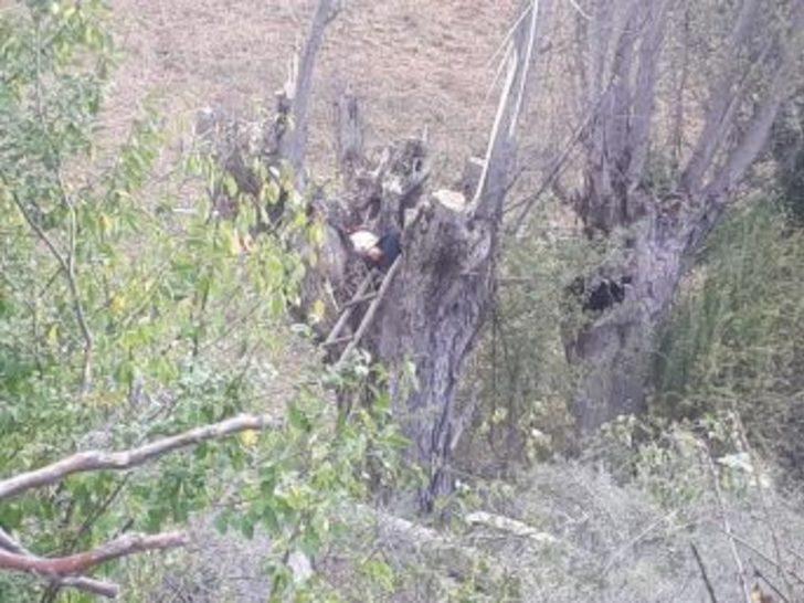 Kestiği Ağacın Altında Kalan Şahıs Hayatını Kaybetti
