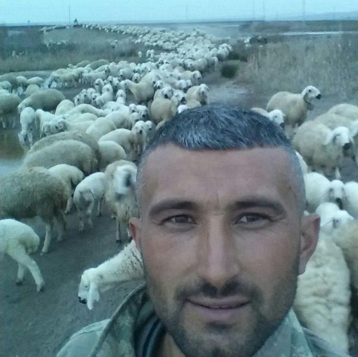 Elektrik Akımına Kapılan Koyunu Kurtarmaya Çalışan Çoban Hayatını Kaybetti