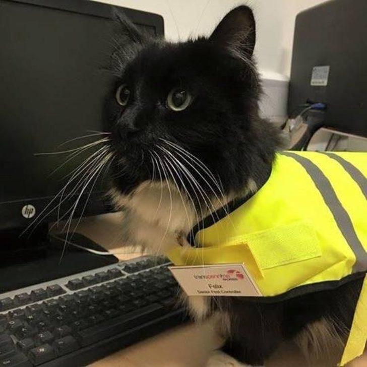 Sizi 5 Yıldır Yuvasına Ekmek Götürmek İçin İstasyonda Çalışan Emekçi Kedi Felix İle Tanıştıralım!