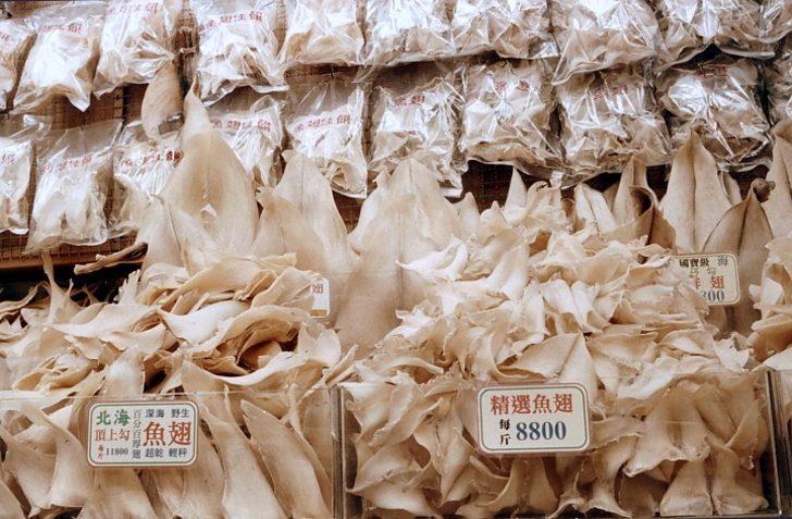 Yaraları İyileştirip Tümör Büyümesine Engel Oluyor: Köpek balığı Kıkırdağı