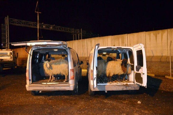 Diyarbakır'da Hayvan Hırsızları Yakalandı