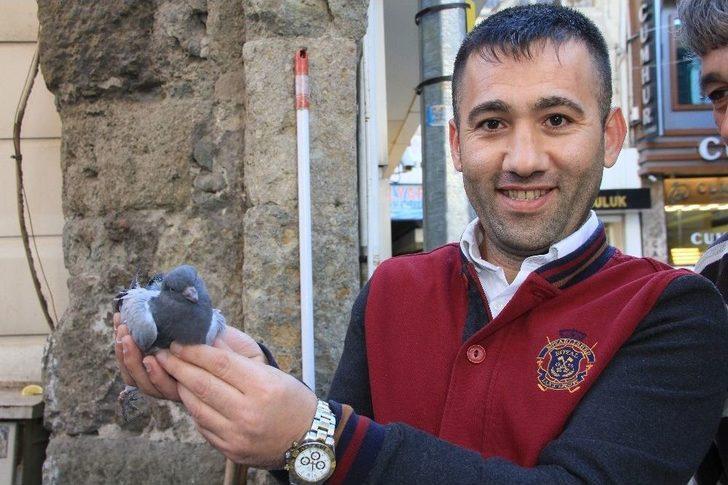 Samsun'da Güvercin Kurtarma Operasyonu