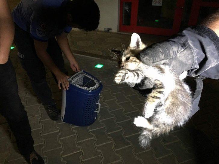 (özel) Otomobilin Motorunda Sıkışan Yavru Kediye Çifte Kurtarma Operasyonu