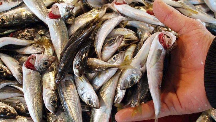 Kırmızı etten sonra bir uyarı da balık için! Aynı tehlike