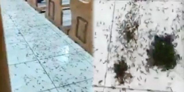 Korkutan görüntü! Binlerce karınca kiliseyi adeta istila etti