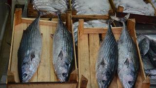 Nadir görülüyordu! Balıkçılar bile inanamadı