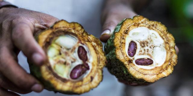 Sebzeleri ve meyveleri doğal ortamlarında tanıyabilir misiniz?
