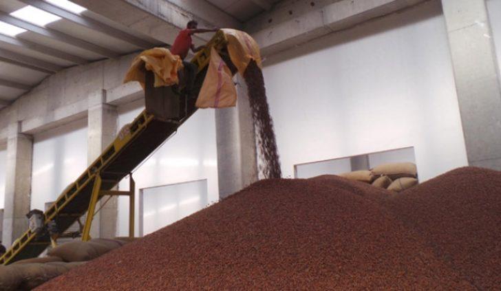 Fındık üretiminde hedef 1 milyon ton