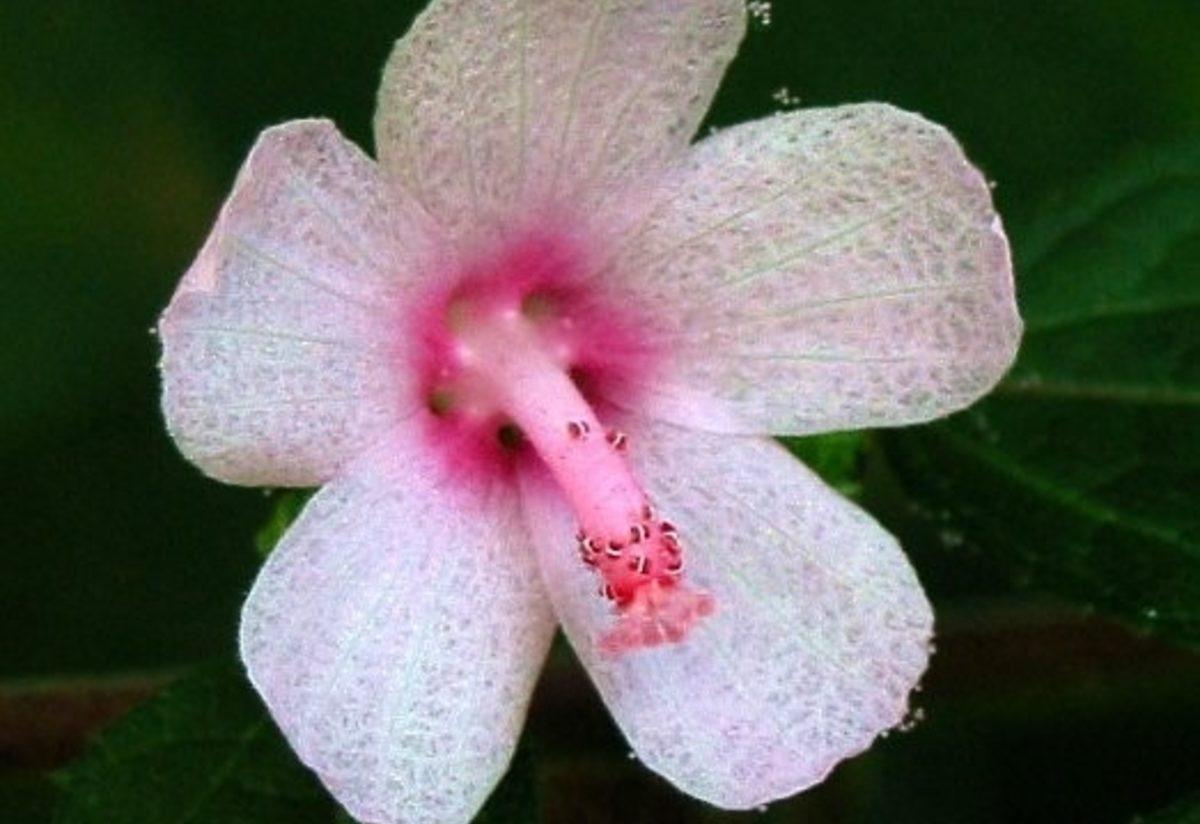 cinsel organa benzeyen bitkiler