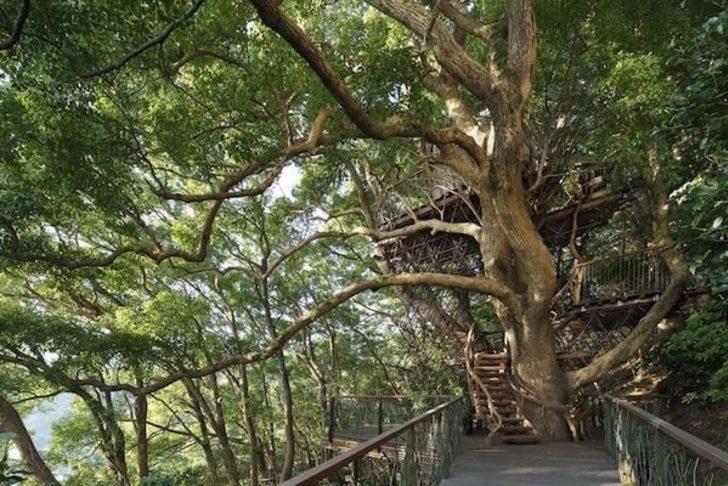 Ağaçev Deyince Aklınıza Gelenleri Bir Kenara Koyun. Japonlar Bu İşi De Biliyor