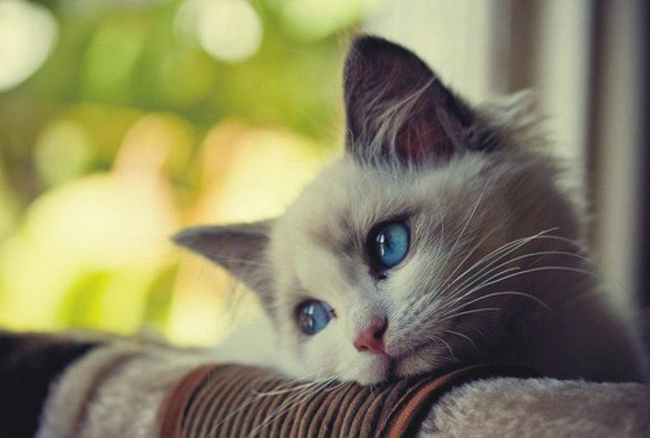 Hayvanlar Aleminde De Derin Aşk Acılarının Yaşanabileceğini Gösteren, 25 Üzgün Surat İfadesi