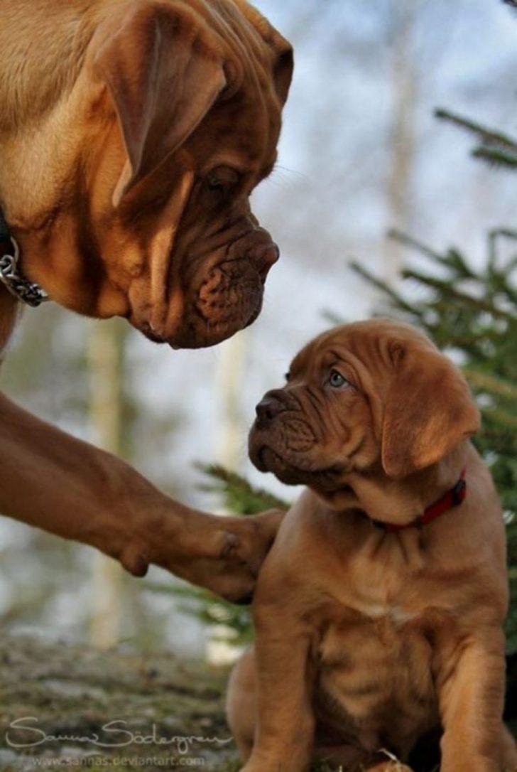 ''Allah Analı Babalı Büyütsün!'' Diyeceğiniz 17 Aile Pozu. Ama Köpeklerden!