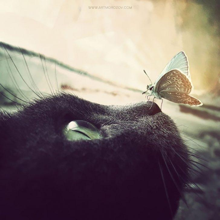 Kelebeklerle Arkadaşlık Kurdular, Dünyanın En Şirin Karelerini Yarattılar