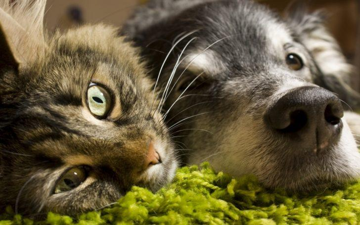Kediler ve Köpeklerin Dostluğu: Bir Misafirlik Hikayesi!