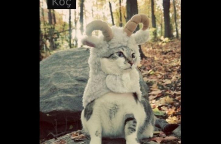 Burcunuzu Temsil Eden 12 Şirin Kedi