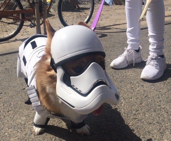 Gücü Huy Edinmiş Star Wars Köpekleri