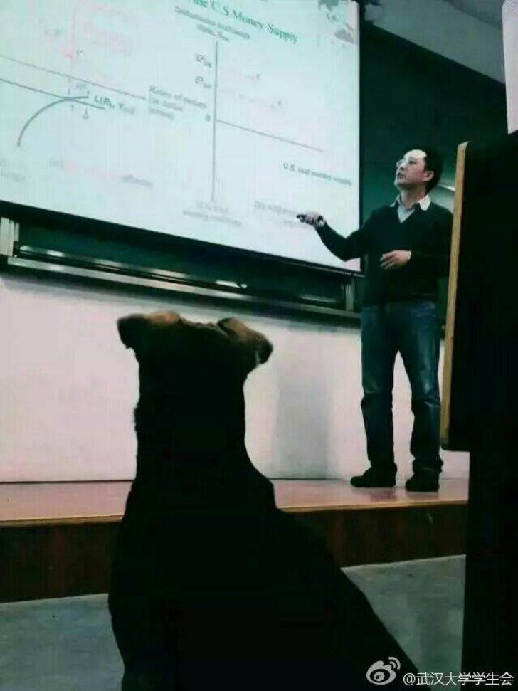 Bir Köpek Kadar Olamadık! Üniversitede 3 Anadal Yapan Köpek: Huanhuan