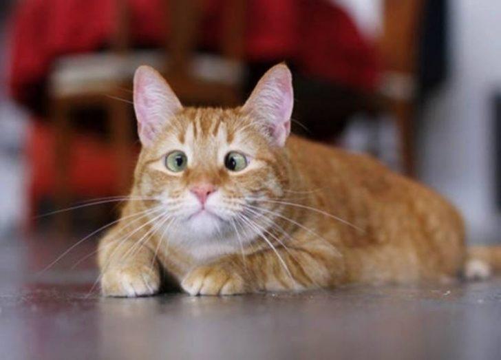 Şehla Gözün Ayrı Güzel Olduğunu Kanıtlayan 11 Şaşkın Kedi