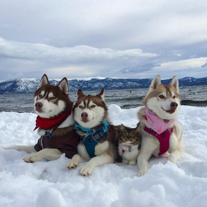 Ölümün Kıyısından Dönüp 3 Köpek Dostu İle Hayata Tutunan Tatlı Kedi Rosie!