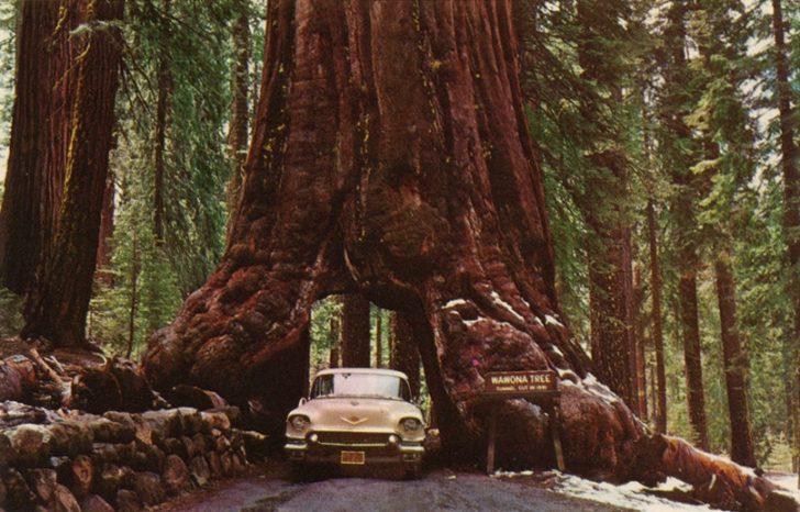 Dünya Üzerinde Kaç Adet Ağaç Var?