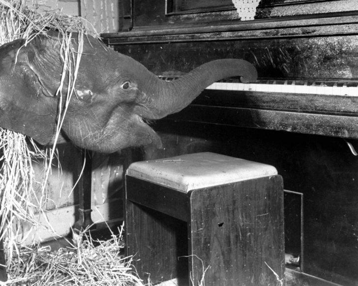 Sirk Fili Butch'ın Hüzünlü Hikayesi