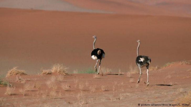 Namib Çölü'nde inadına yaşam