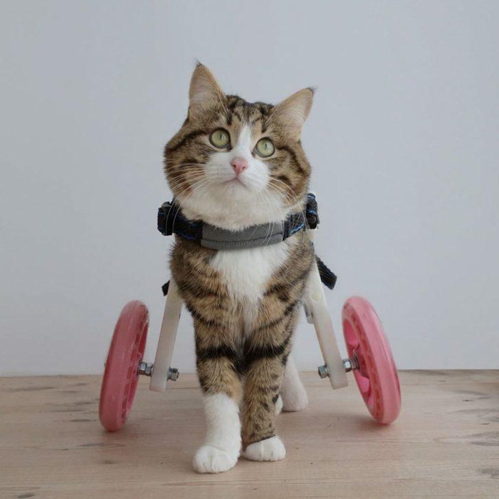 Engelli olmanın yetersizlik olmadığının kanıtı: Koca Yürekli Rexie