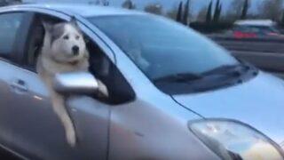 Herkes bu köpeği seyretti