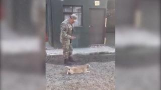 Sevimli köpek kahkahaya boğdu