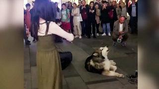Kemancıya eşlik eden köpek